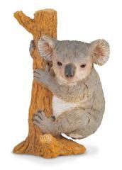 Collecte - Koala Na Stromu