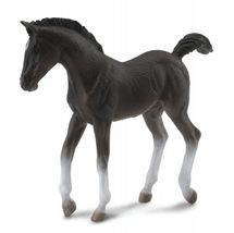 Collecte - Tennessee Walking Horse - hříbě černé
