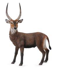 Collecte - Antilopa vodní