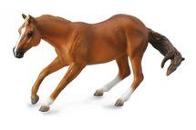 Collecte - Quarter horse