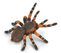 Collecte - tarantule