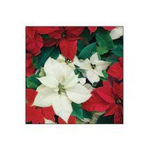 SUSY CARD - Vánoční ubrousky 33x33 cm - Vánoční hvězda