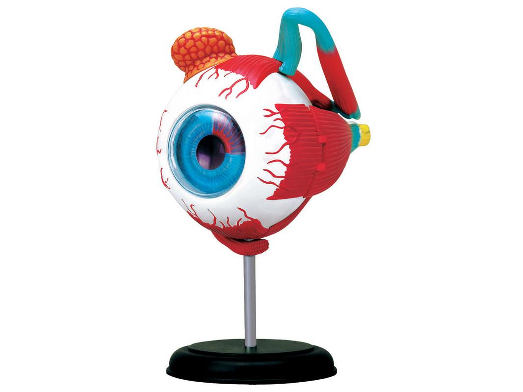 WIKY - Anatomie těla 4D - Oko